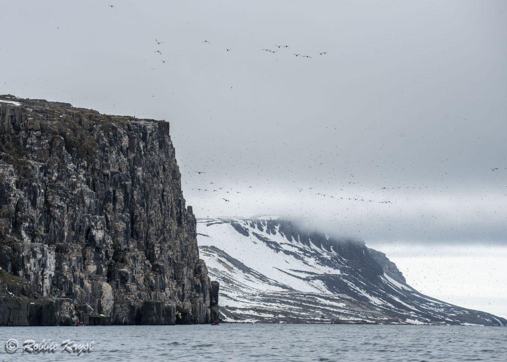 Alkefjellet Bird Cliff