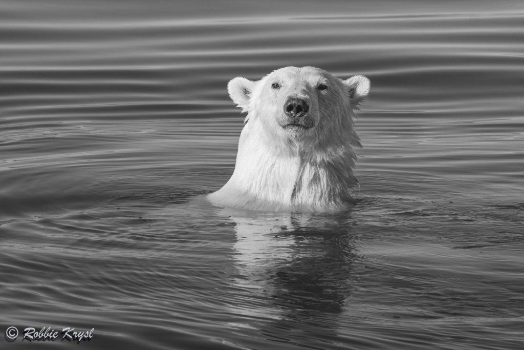 Ice Hunting